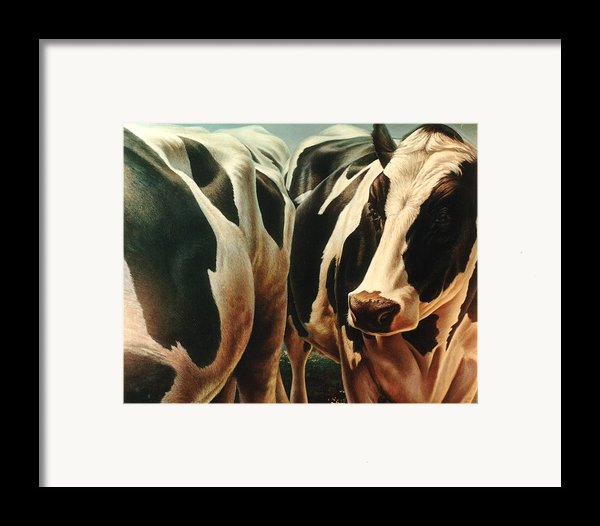 Cows 1 Framed Print By Hans Droog
