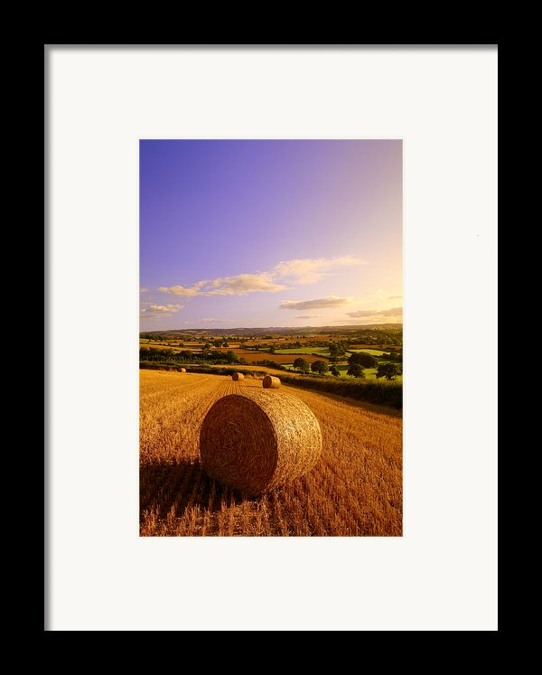 Devon Haybales Framed Print By Neil Buchan-grant