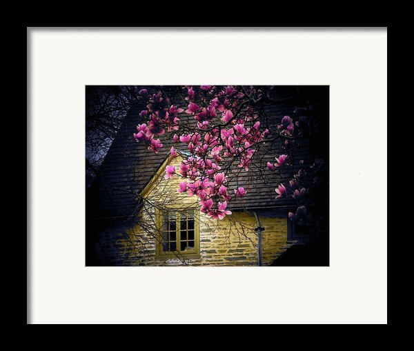 Dogwood By The Window Framed Print By Joyce Kimble Smith