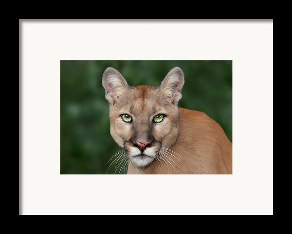 Enya Framed Print By Big Cat Rescue