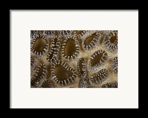 Extreme Close-up Of A Crust Anemone Framed Print By Terry Moore