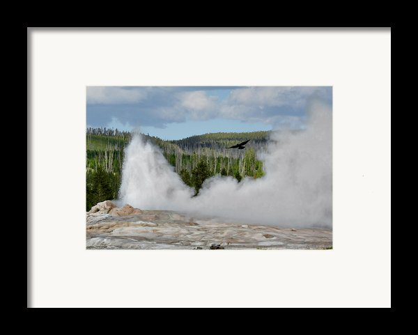 Falcon Over Old Faithful - Geyser Yellowstone National Park Wy Usa Framed Print By Christine Till