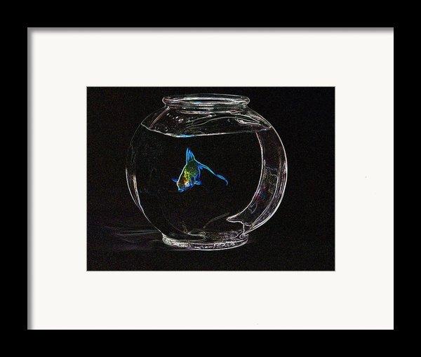 Fishbowl Framed Print By Tim Allen