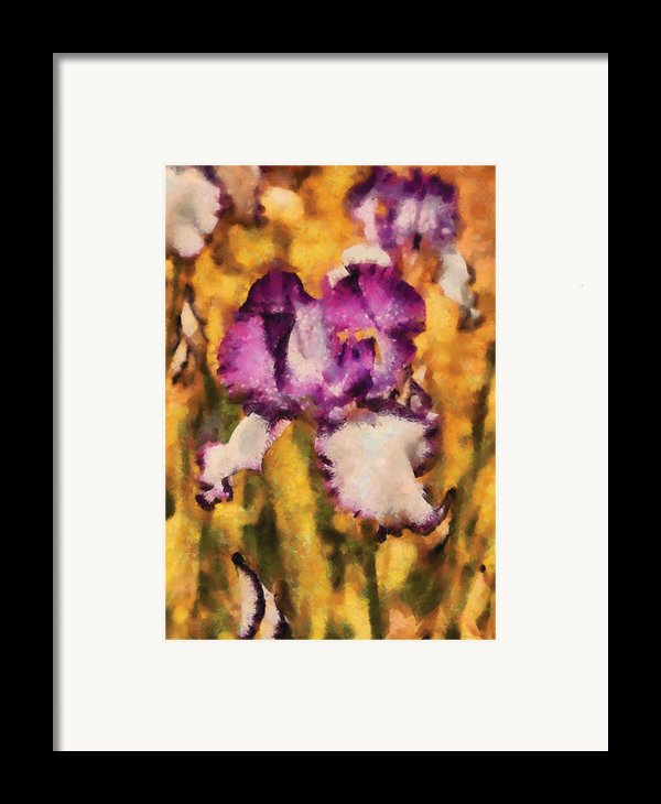 Flower - Iris - Diafragma Violeta Framed Print By Mike Savad