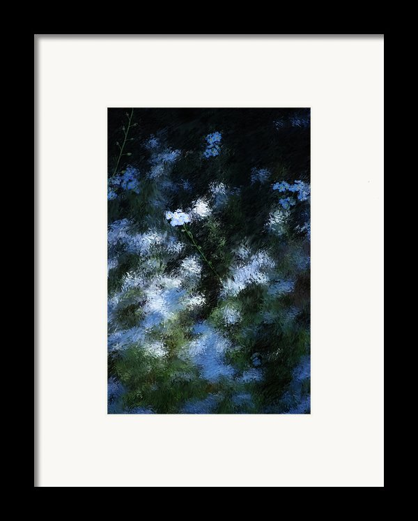 Forget Me Not Framed Print By David Lane
