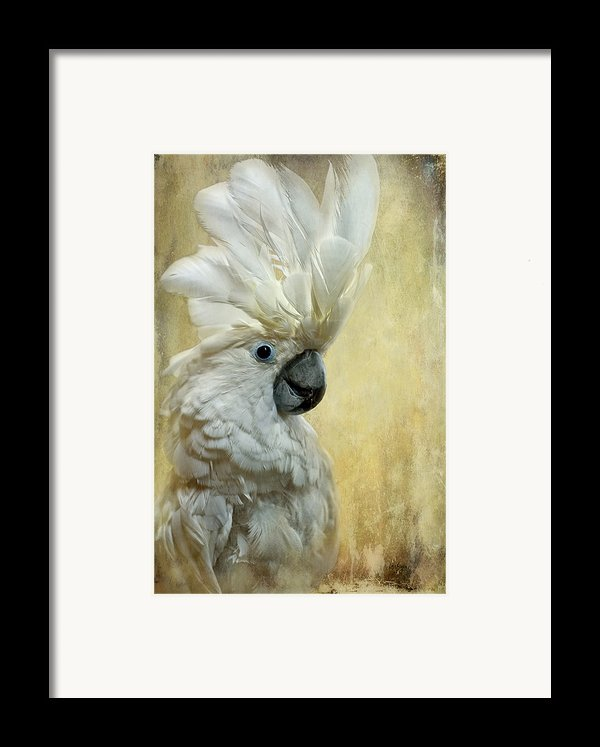 Glamour Girl Framed Print By Lois Bryan