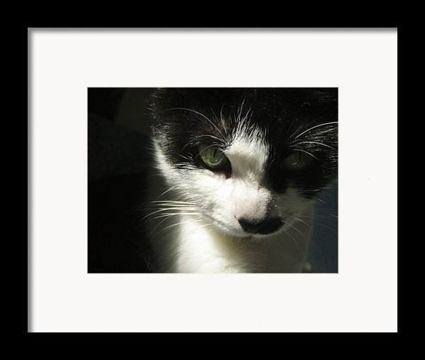 Go Ahead Make My Day  Framed Print By Kristine Nora