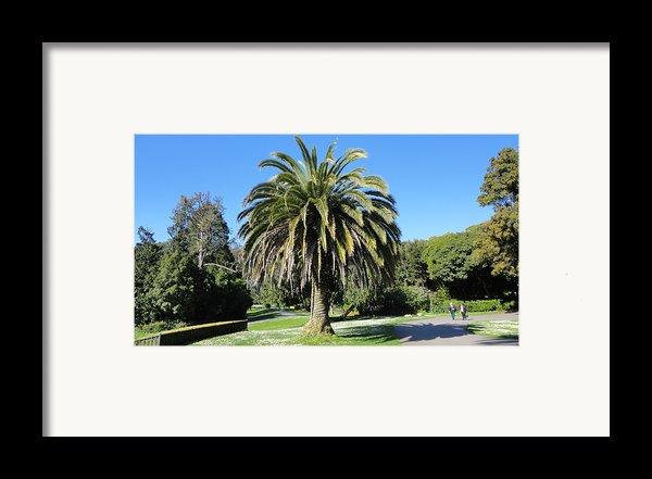 Golden Gate Park  Framed Print By Eliot Jenkins