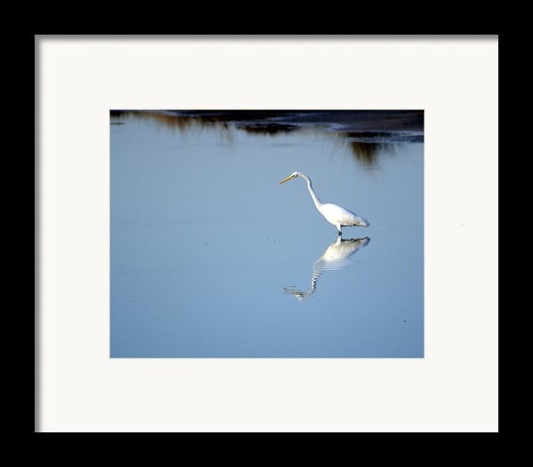Great Blue 2 Framed Print By Marty Koch