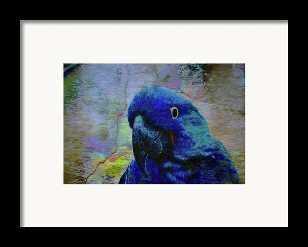 He Just Cracks Me Up Framed Print By Jan Amiss Photography