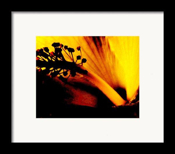 Heat Framed Print By Linda Knorr Shafer