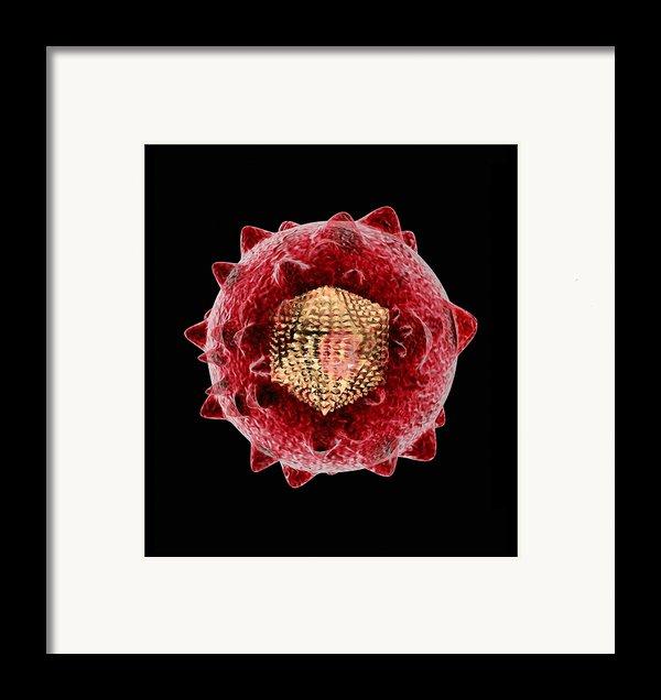 Hepatitis C Virus, Artwork Framed Print By Mehau Kulyk