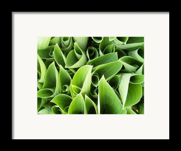 Hostas 3 Framed Print By Anna Villarreal Garbis
