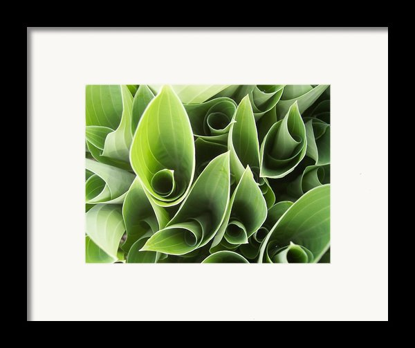 Hostas 5 Framed Print By Anna Villarreal Garbis