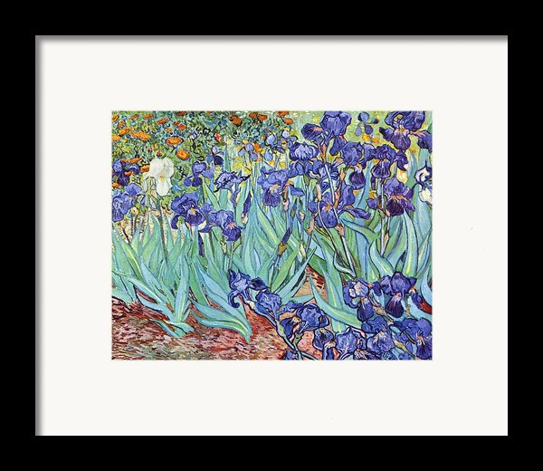 Irises Framed Print By Pg Reproductions