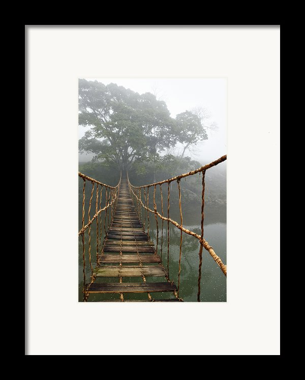 Jungle Journey 2 Framed Print By Skip Nall