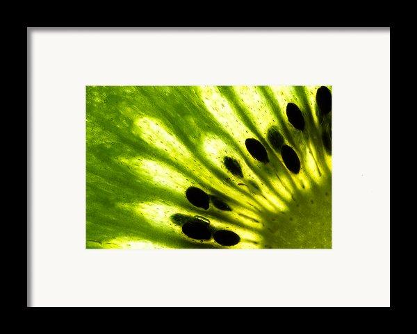 Kiwi Framed Print By Gert Lavsen