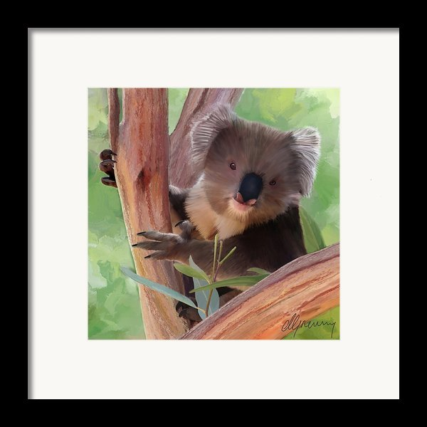 Koala  Painting Framed Print By Michael Greenaway