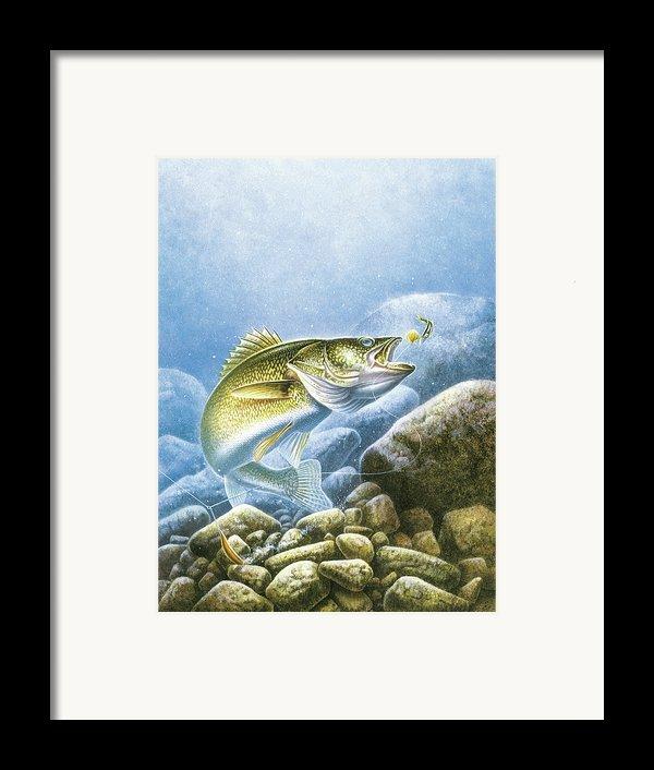Lindy Walleye Framed Print By Jq Licensing