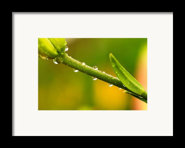 Little Drops Of Rain Framed Print By Amanda Kiplinger