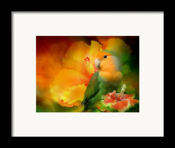 Love Among The Hibiscus Framed Print By Carol Cavalaris