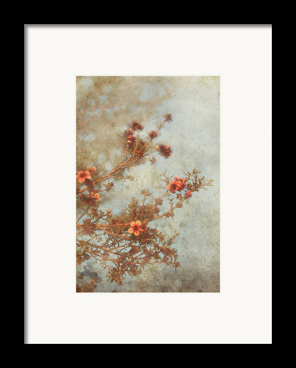 Love Is In Bloom Framed Print By Laurie Search