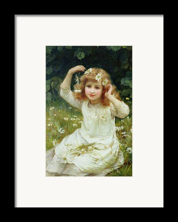 Marguerites Framed Print By Frederick Morgan