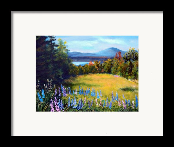Meadow Lupine Ii Framed Print By Laura Tasheiko