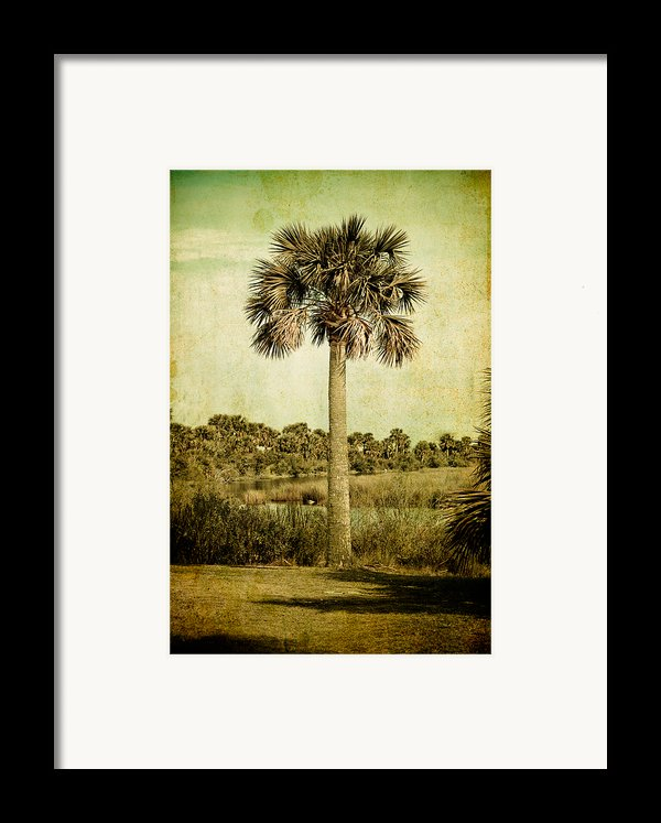 Old Florida Palm Framed Print By Rich Leighton