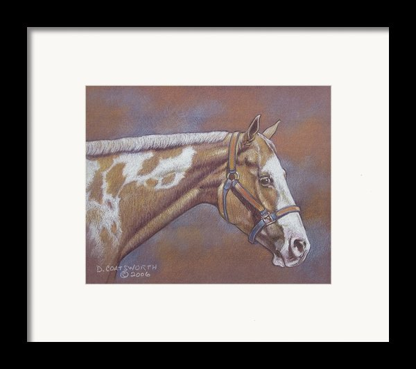 Paint Horse Framed Print By Dorothy Coatsworth