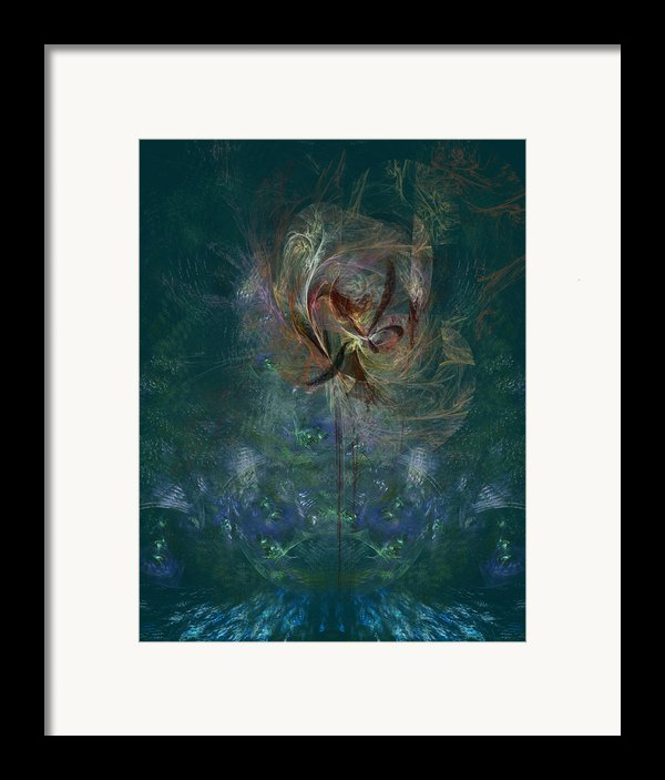 Peacock Orchid Framed Print By C G Rhine