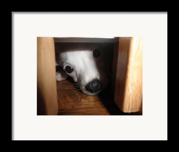 Peek A Boo Framed Print By Camille Reichardt