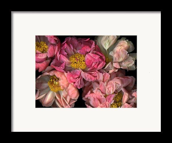 Petticoats Framed Print By Christian Slanec