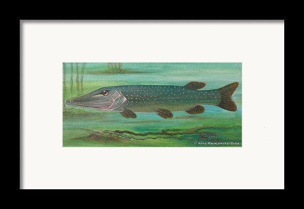 Pike Framed Print By Anna Folkartanna Maciejewska-dyba