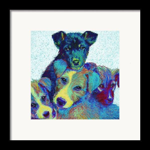 Pound Puppies Framed Print By Jane Schnetlage
