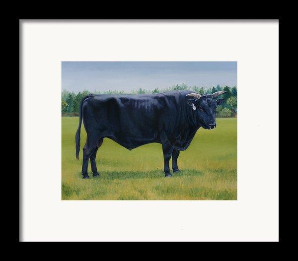 Ralphs Bull Framed Print By Stacey Neumiller