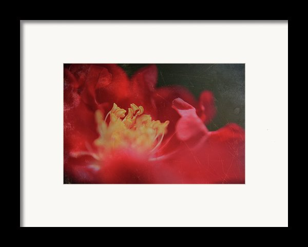 Reaching For Joy Framed Print By Laurie Search