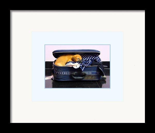 Ready To Fly Framed Print By Pradeep Subramanian