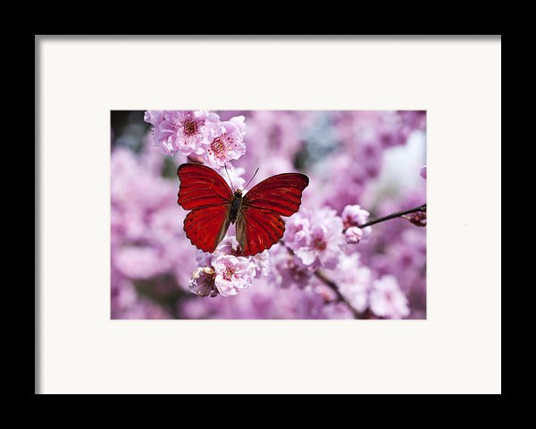Red Butterfly On Plum  Blossom Branch Framed Print By Garry Gay