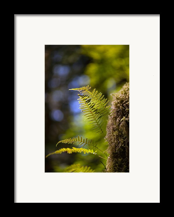 Renewal Ferns Framed Print By Mike Reid