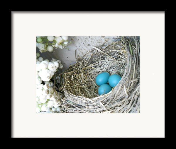 Robin Eggs In A Wreath Framed Print By Marqueta Graham