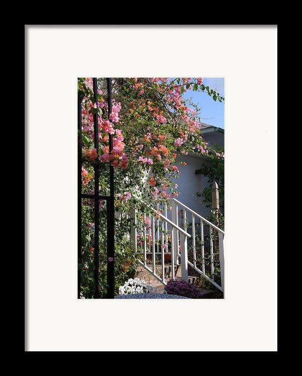 Roses In Winter Framed Print By Susanne Van Hulst
