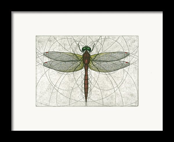 Ruby Meadowhawk Dragonfly Framed Print By Charles Harden