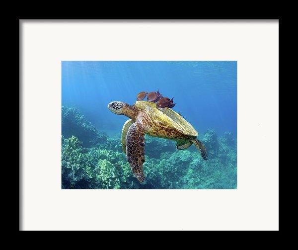 Sea Turtle Underwater Framed Print By M.m. Sweet
