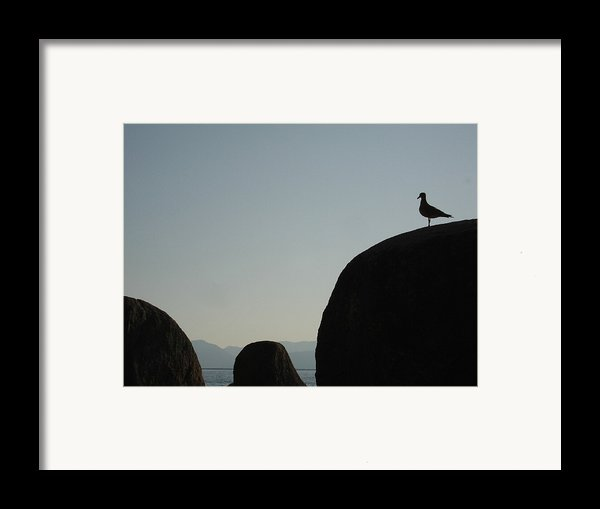 Seagull Silhouette Framed Print By Silvie Kendall