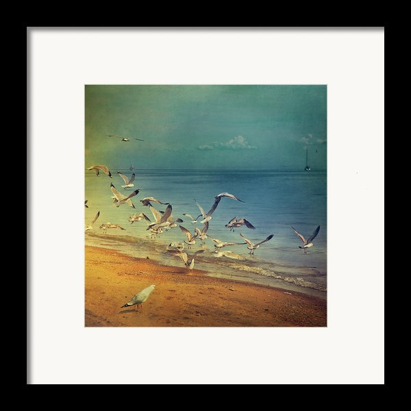 Seagulls Flying Framed Print By Istvan Kadar Photography