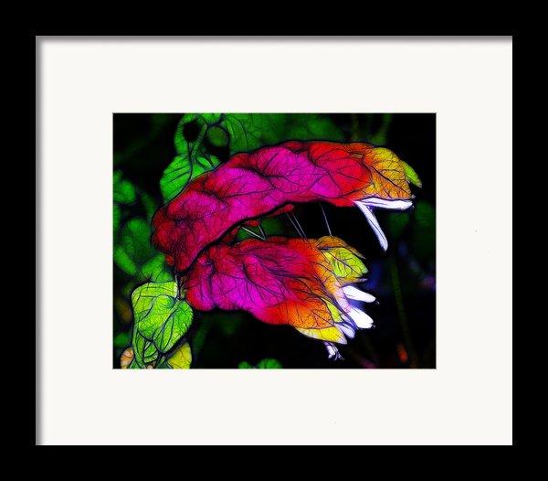 Shrimp Plant Framed Print By Judi Bagwell