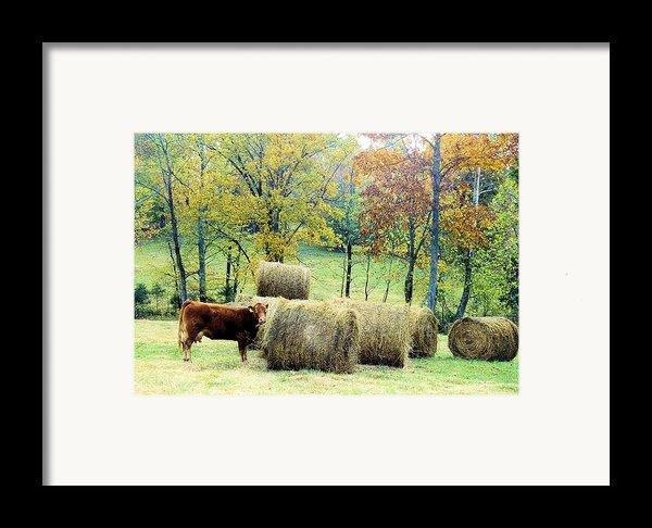 Smorgasbord Framed Print By Jan Amiss Photography