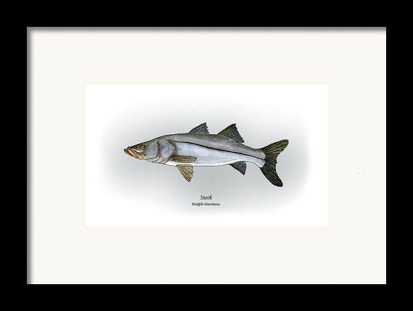 Snook Framed Print By Ralph Martens