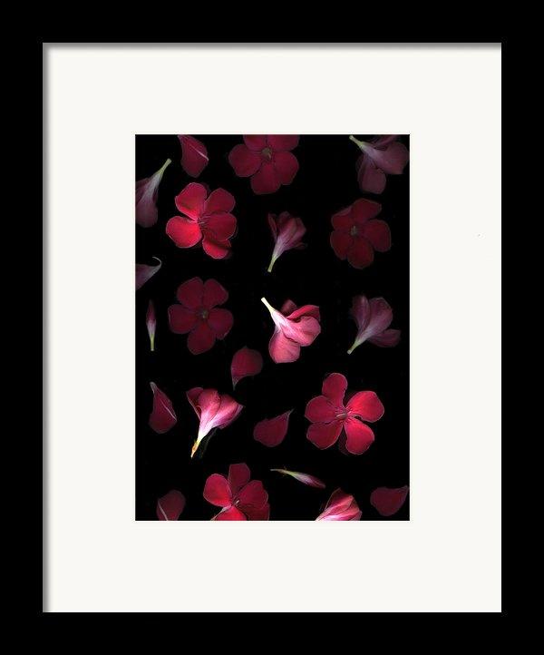 Spring Framed Print By Christian Slanec